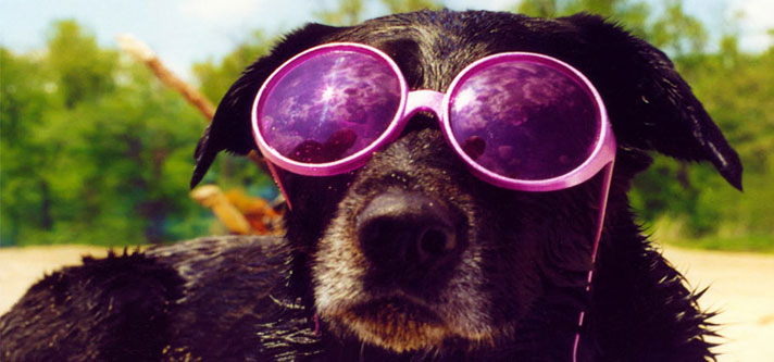 The Hazards of Hot Climate for Dogs
