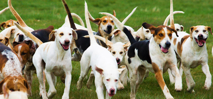 The Global Effects of Spayed or Neutered Your Dog