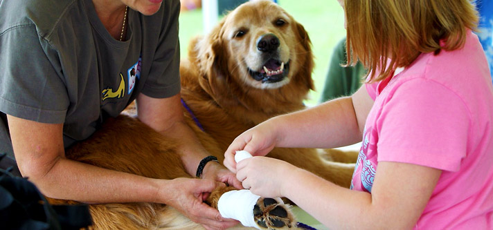 Emergency first aid tips for dogs