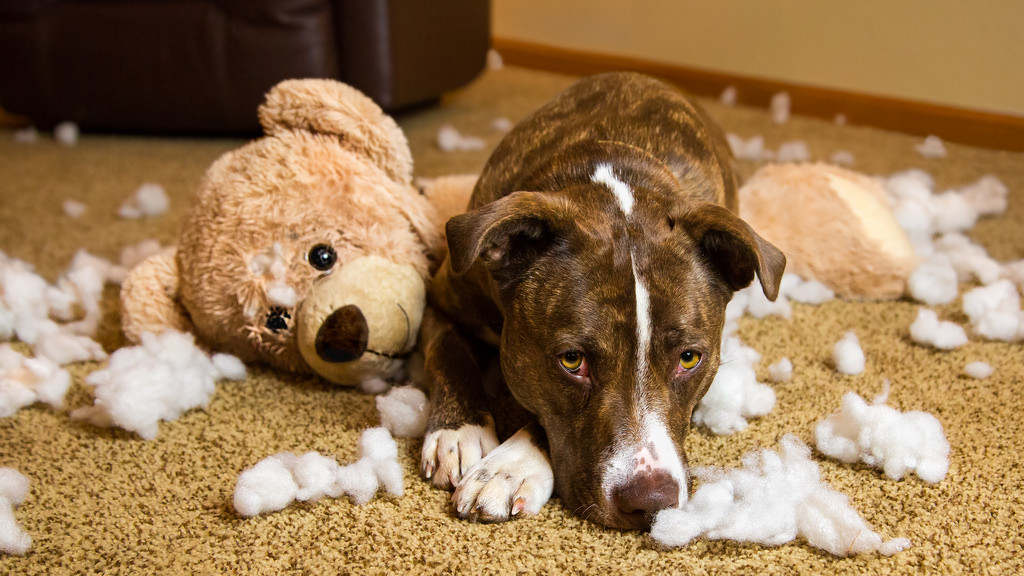 Dog Separation Anxiety: Some at Home Solutions
