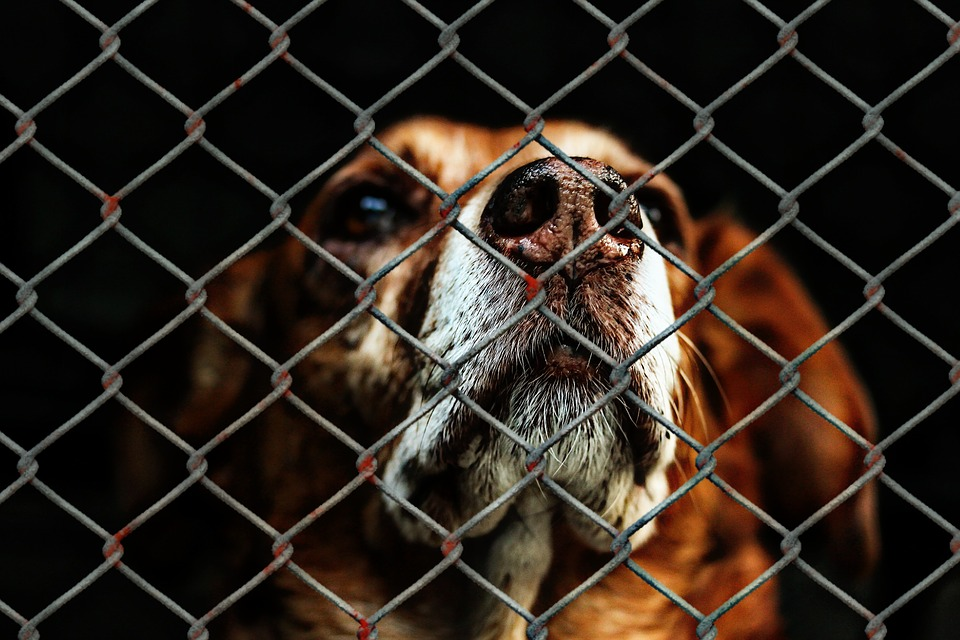 Tips For Picking the Perfect Shelter Dog For Your Family